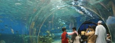 Turismo en los mejores acuarios de Japón