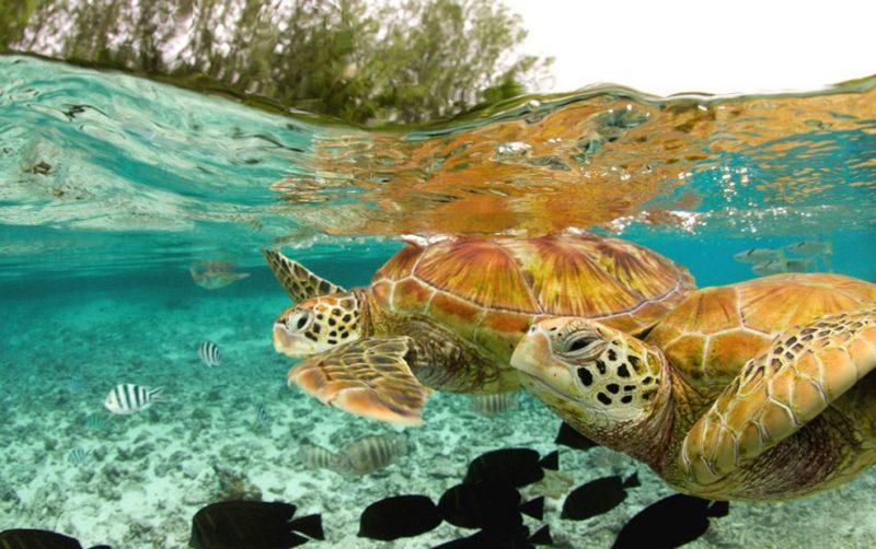 tortugas bora bora