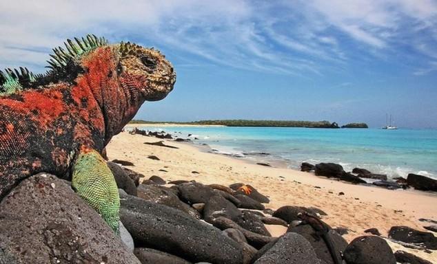 19 islas que componen las Islas Galápagos son el hogar de la fauna