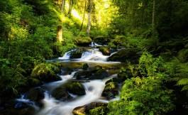 Selva Negra, rutas, que ver, que visitar, viajes turismo