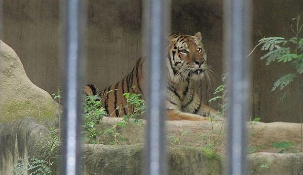 lujan zoo