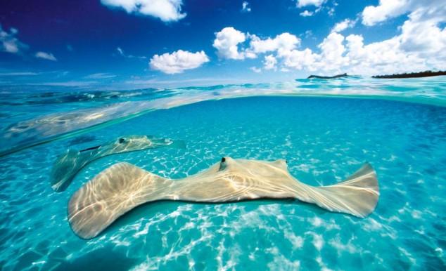 aguas islas cayman