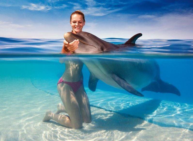 nadar con delfines en isla mauricio