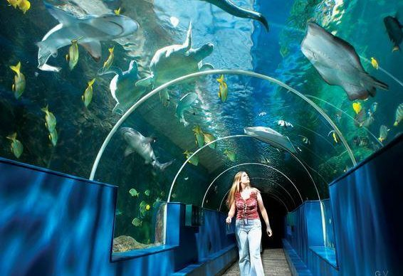 parques acuaticos san petesburgo
