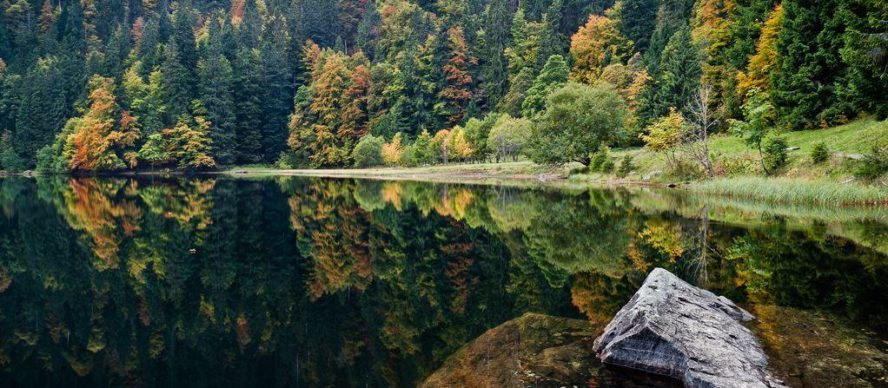 viaje a alemania selva