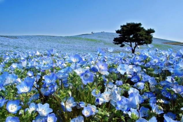 Un paraíso llamado Parque Hitachi Seaside en Japón