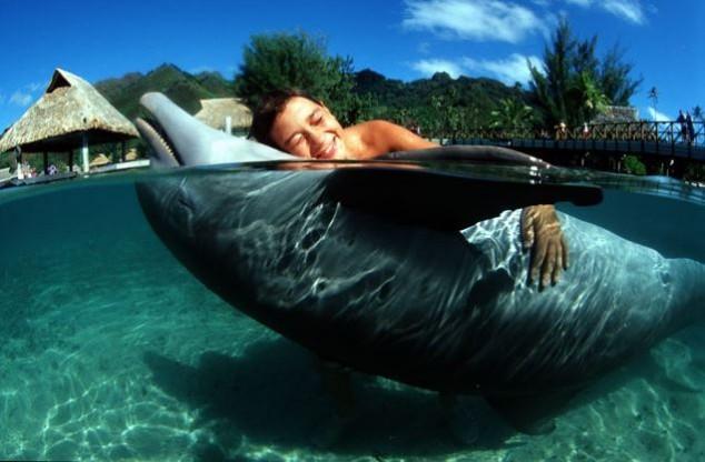 nadar delfines isla mauricio