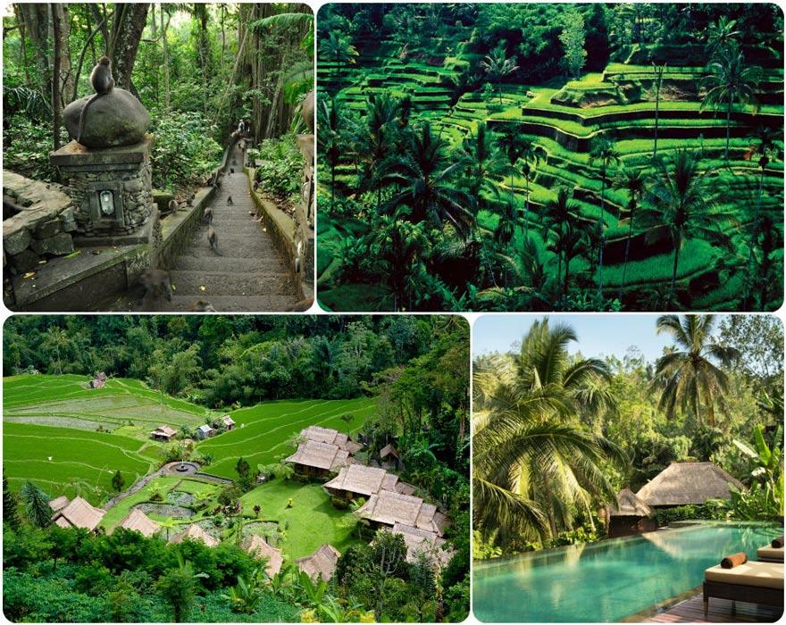 ubud isla indonesa bali