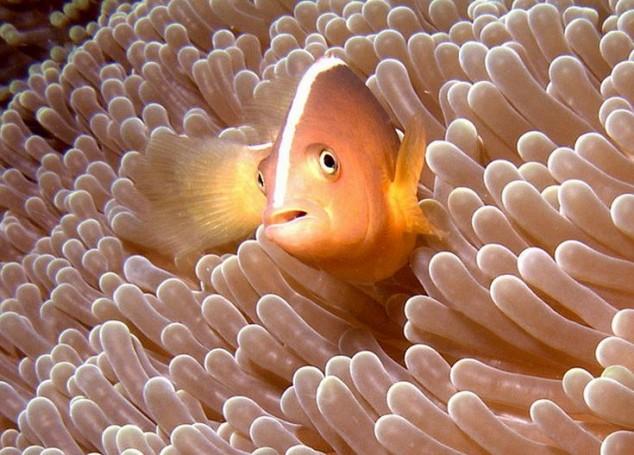 Bunaken es una de las más famosas zonas de buceo y snorkel de Indonesia