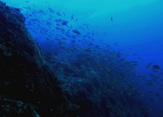 Tenggol, isla no identificada