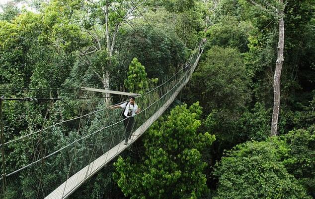 malasia bosques más antiguos de lluvia tropical