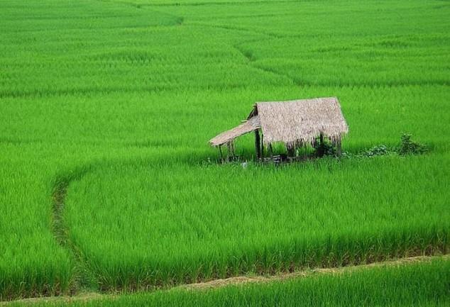 norte de Tailandia tour
