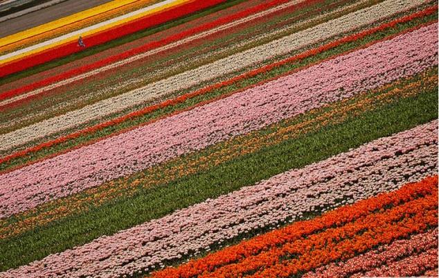 Jardines de Keukenhof mayor jardin de flores