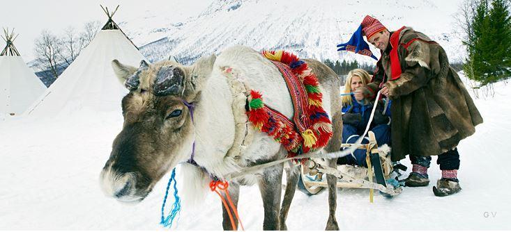 Trineos de renos en Noruega