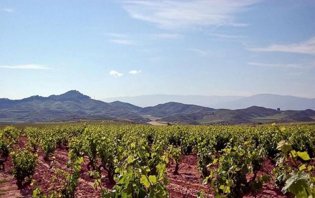 rioja bodegas de vino