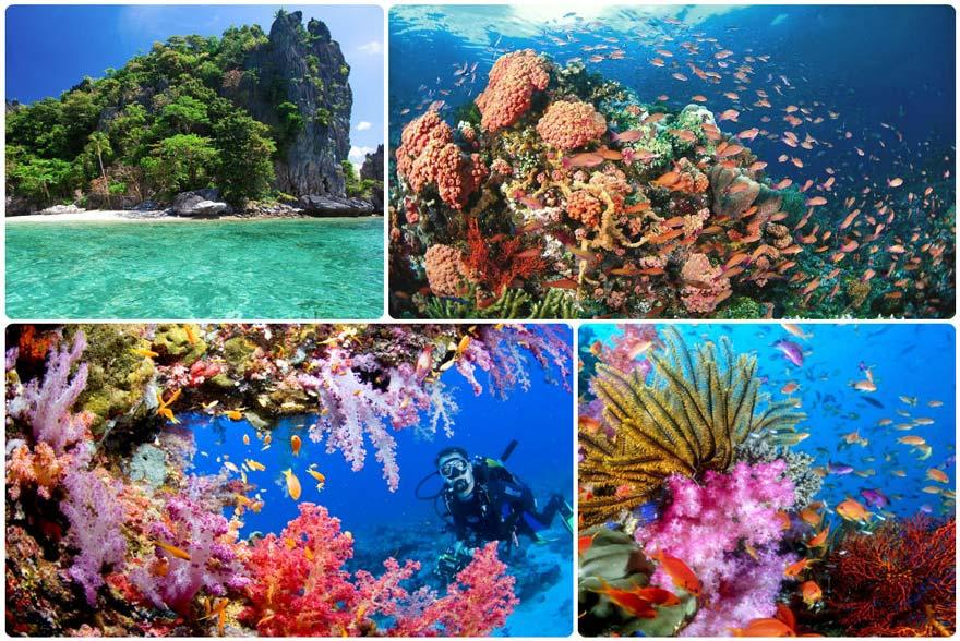 filipinas arrecife tubbatha
