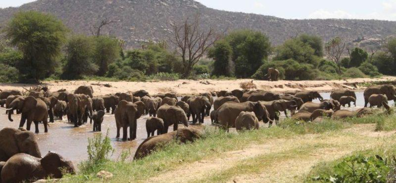 Samburu Shaba y Buffalo Springs