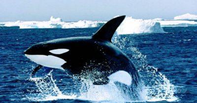 ballenas valdes