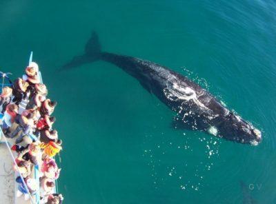 ballenas valdes argentina