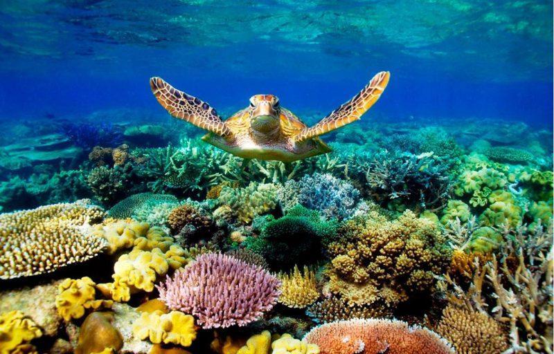 barrera de coral australia
