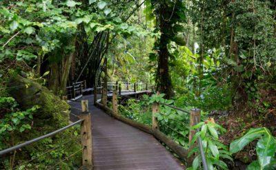 jardin botanico hawai