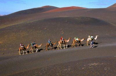 montar camello lanzarote