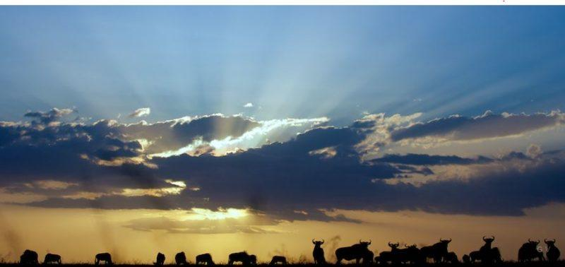 paisaje serengeti tanzania