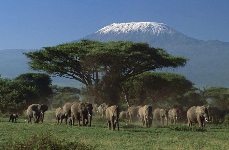 parque nacional masai mara en kikuyu kenia
