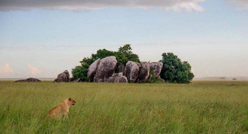serengeti parque nacional tanzania