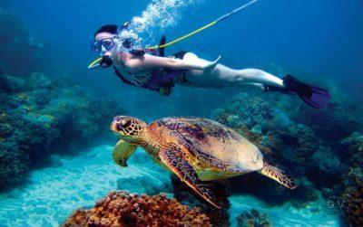 snorkeling hawai