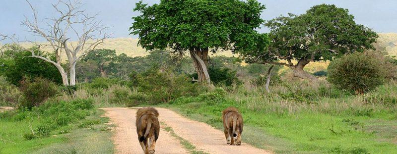 tanzania selva