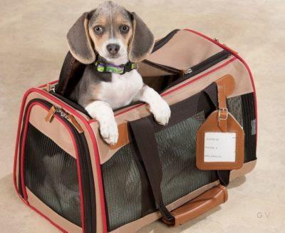equipaje del perro