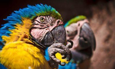 fauna peru