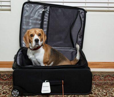 viajar con perro las noches