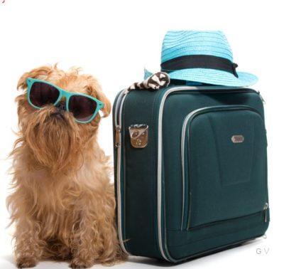viajar con perro transporte