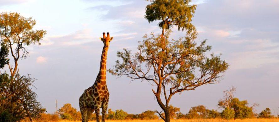 visitar sudafrica