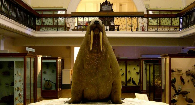 museo horniman londres