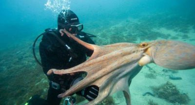 submarinismo rab croacia