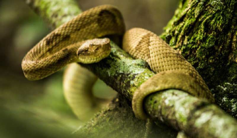 La terrorifica isla poblada por serpientes mortales de Brasil